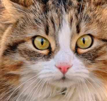 Agosto: el mes de los gatos ¿Por qué?