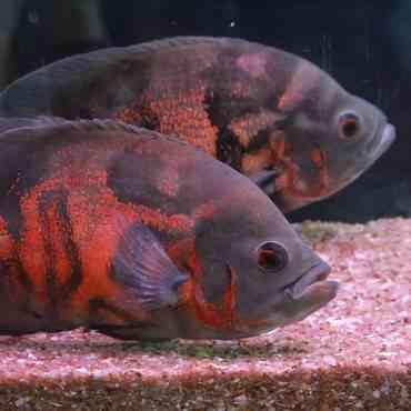 6 consejos para el cuidado del acuario en el hogar