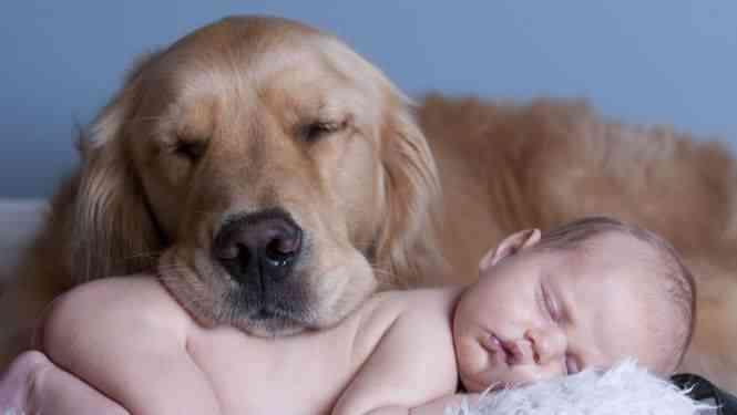 perros-niños