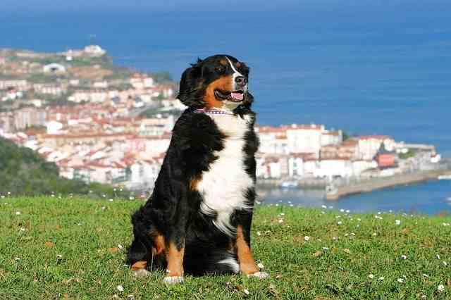 vacaciones-mascotas