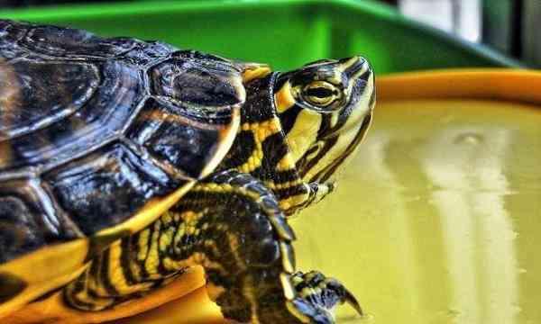 viajar-tortugas