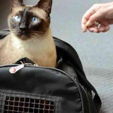 Cómo viajar en coche con tu gato