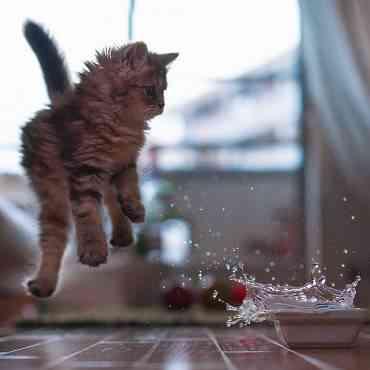 Aprende a bañar a tu gato