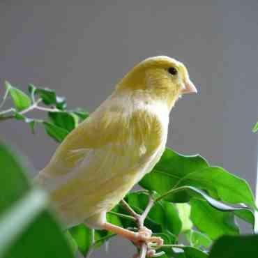 Cuáles son los mejores pájaros para tener como mascota