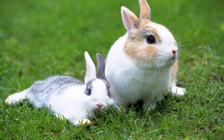 Cu ntos a os vive un conejo mascotalia - Casas para conejos enanos ...