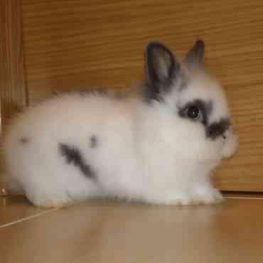 Las enfermedades más habituales en un conejo