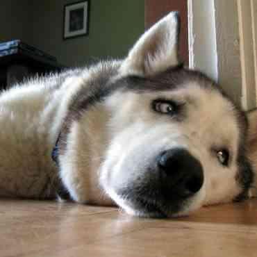 Cómo actuar si tu perro está deprimido