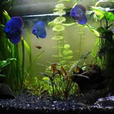 Consejos para evitar el estrés en los peces