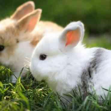 Cómo limpiar la jaula de tu conejo
