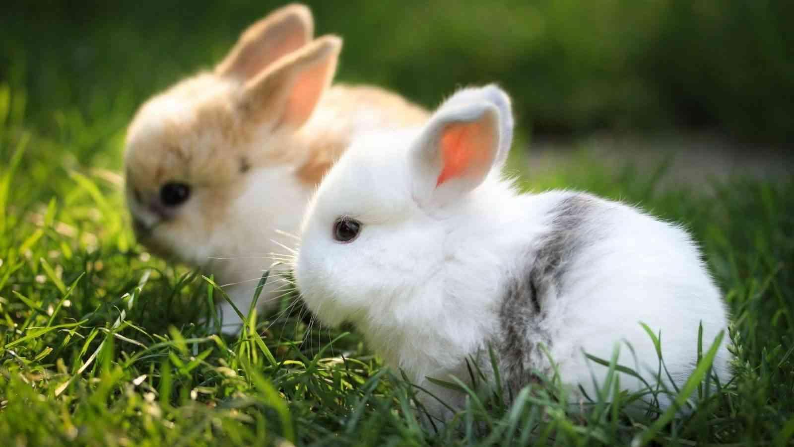limpieza jaula conejos