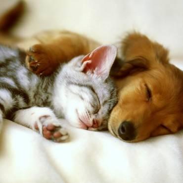 Convivencia entre perros y gatos, ¿es posible?