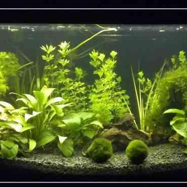 Aprende a elegir las plantas adecuadas para tu acuario