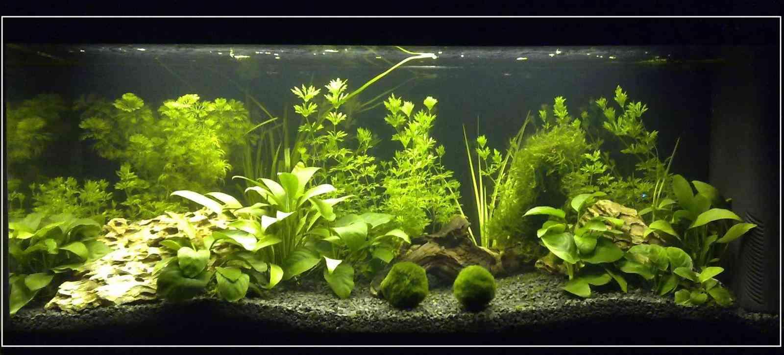 plantas adecuadas acuario