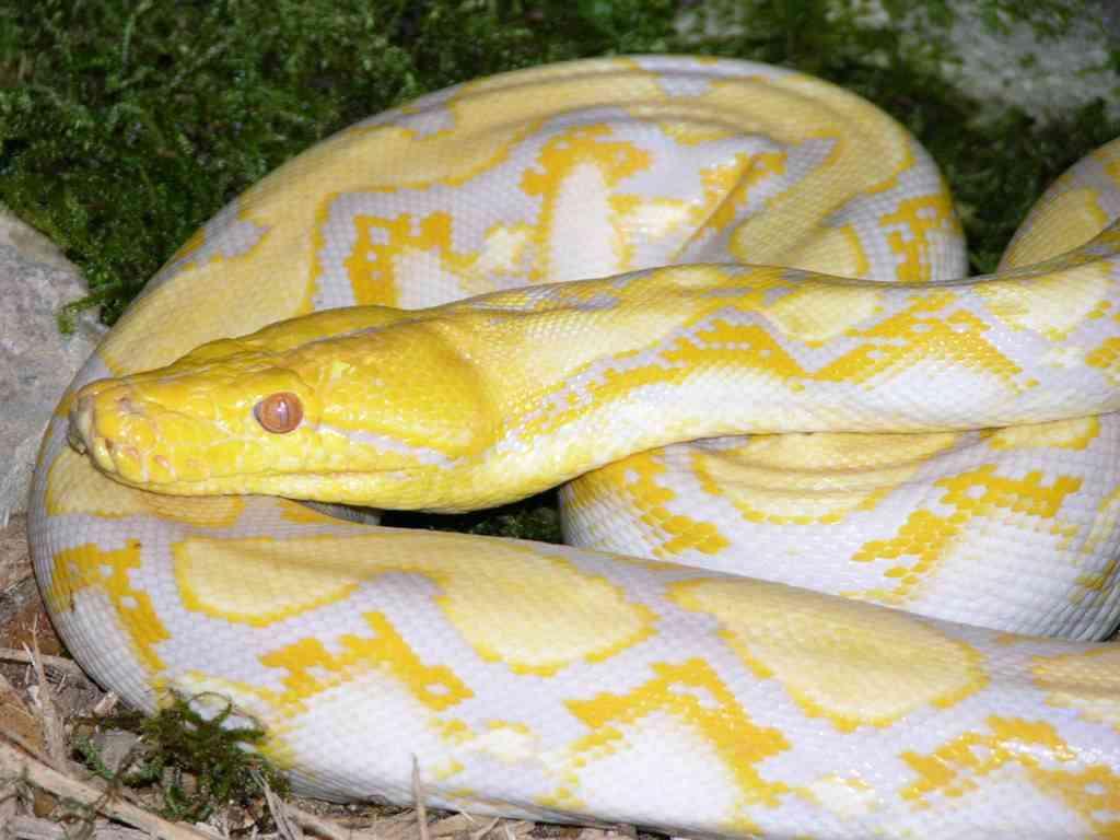 serpientes como mascota