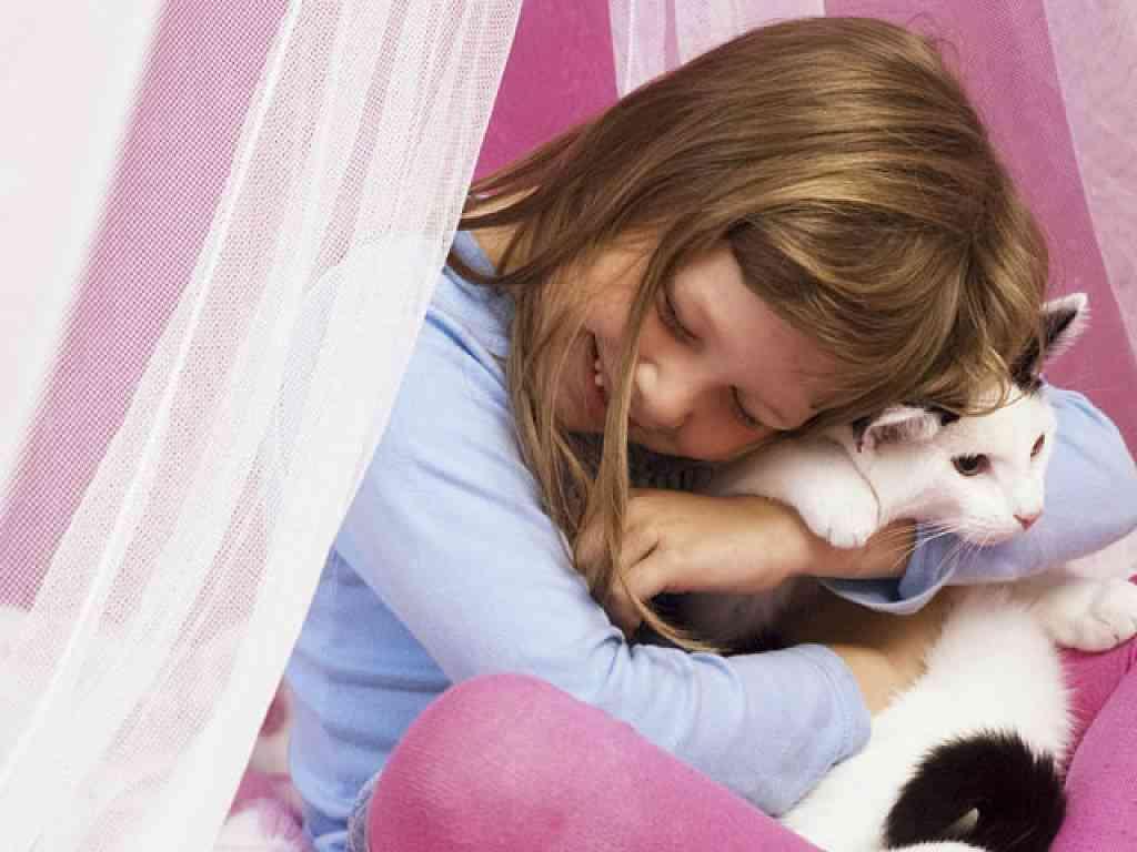 valores gatos al niño