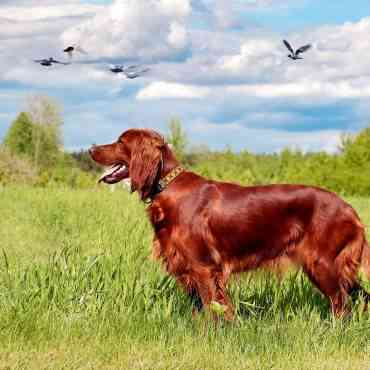 Los mejores perros de caza