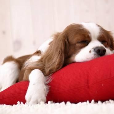 ¿Cuántas horas puede dormir un perro durante el día?