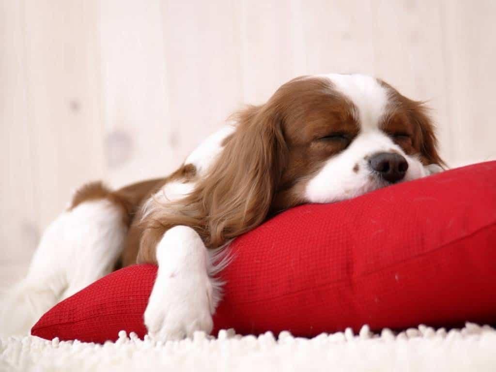 Perros dormir