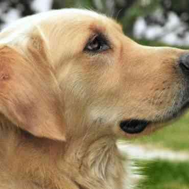 Motivos por los que no debes abandonar nunca a un perro