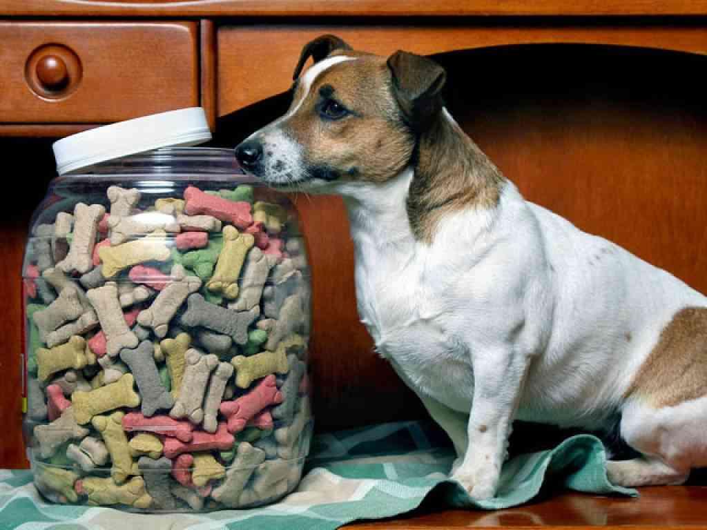 alimentos recomendados perros