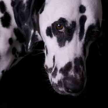 Qué hacer si tu perro se muestra celoso