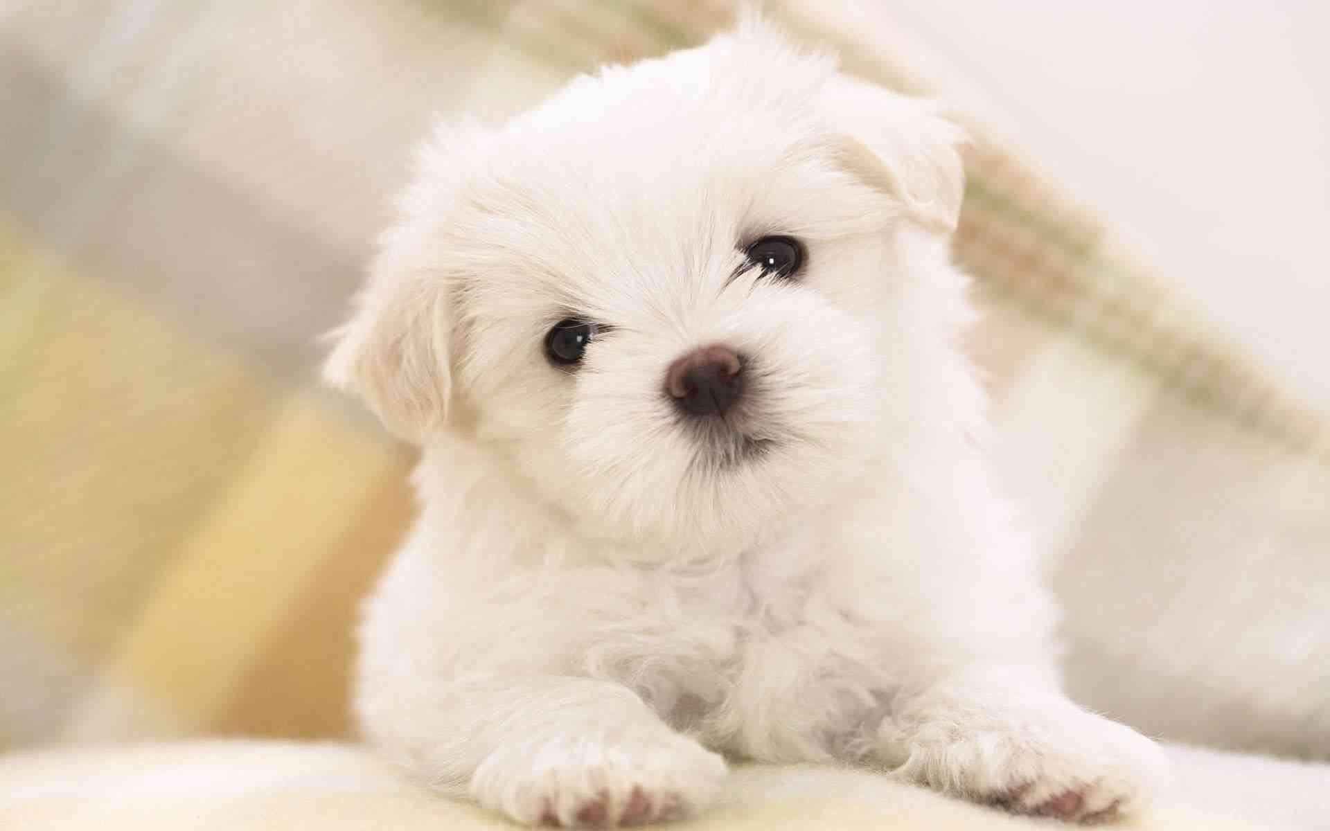 coprofagia canina