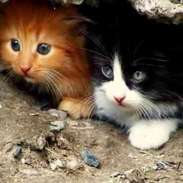 Algunas curiosidades sobre los gatos