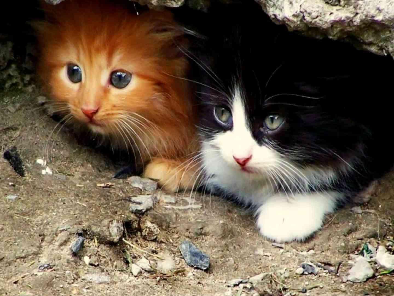 curiosidades de gatos