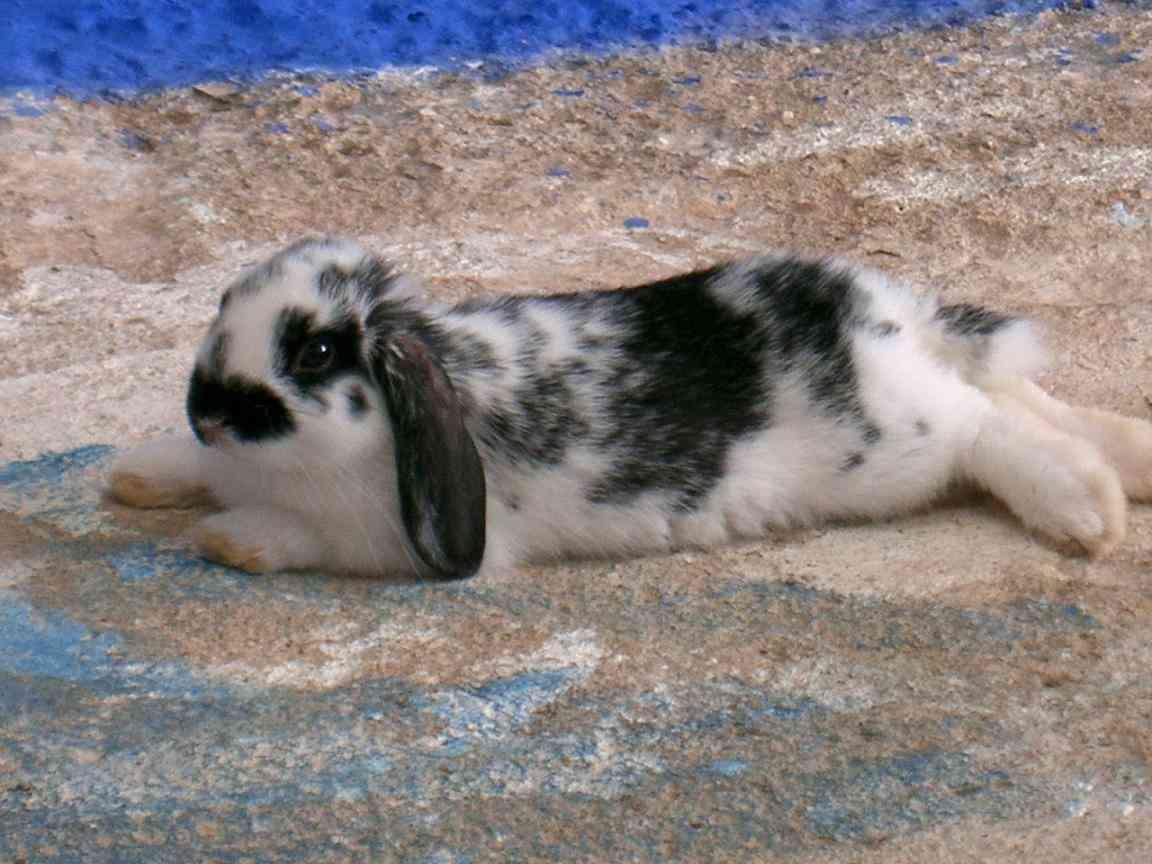 curiosidaes conejos
