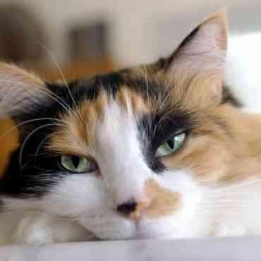 Consejos para dejar tu gato solo en casa