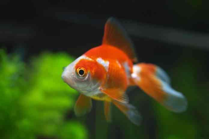 mejores peces acuario