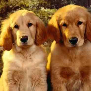 ¿Qué prefieres: perro macho o hembra?