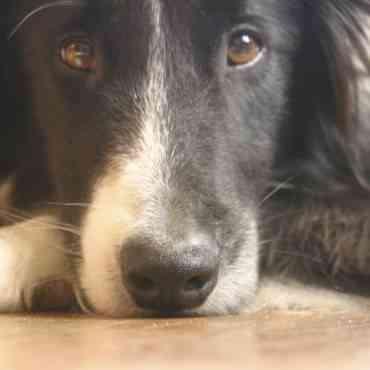 Cómo cuidar de un perro ciego