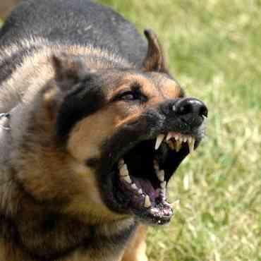 Las razas de perro que más ladran