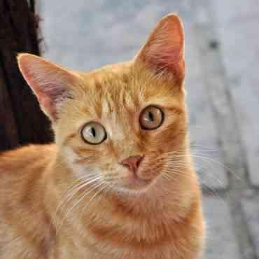 Consejos para conseguir que tu gato se tranquilice por las noches