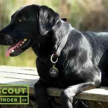 Aplicación Pawscout: para saber dónde está nuestra mascota