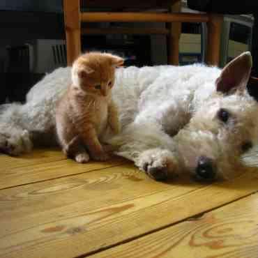 Celos en los perros: ¿es posible? ¿cómo lo detecto?