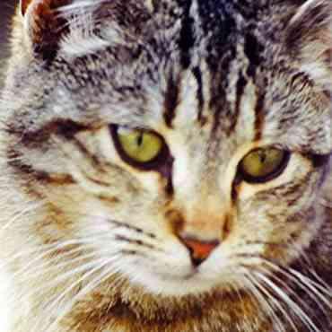 ¿Se puede confiar en un gato como mascota?