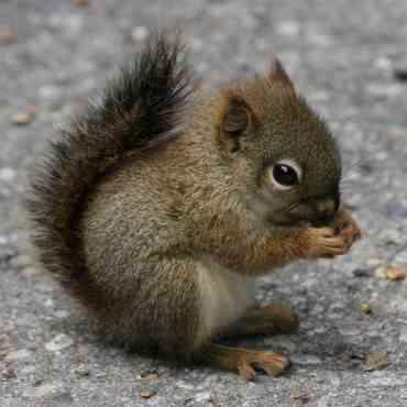 La ardilla, una mascota diferente