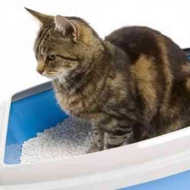 Elige el mejor tipo de arena para tu gato
