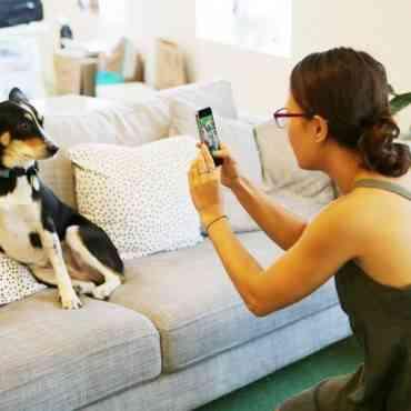 Barkcam, una aplicación android para hacer fotos a las mascotas