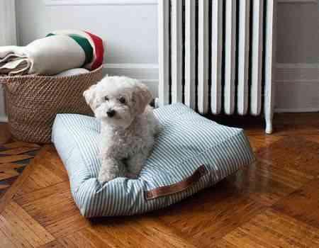 Cómo hacer cojines para mascotas?