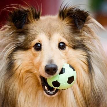 Cinco cuidados básicos que debes saber sobre tu perro