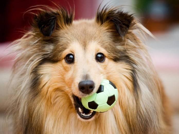 cuidados básicos perros