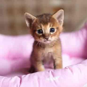 ¿Cómo cuidar gatitos recién nacidos?