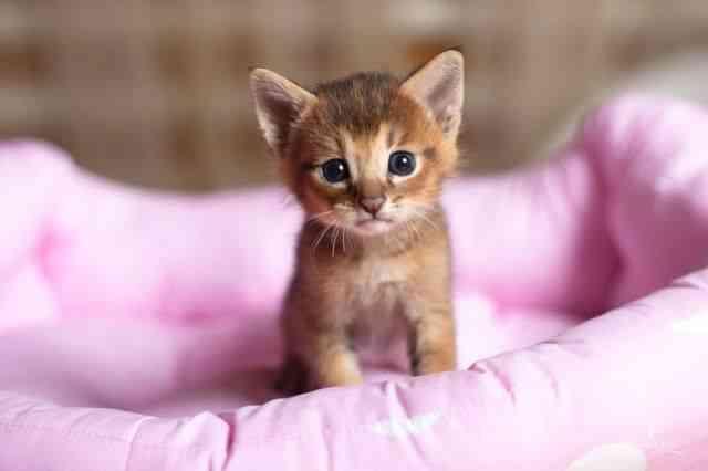 cuidar gatitos recién nacidos