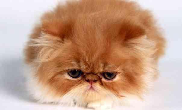 depresión_en_los_gatos
