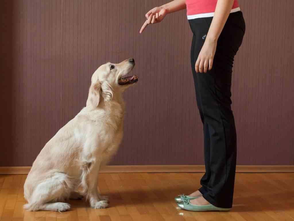 educar a tu perro