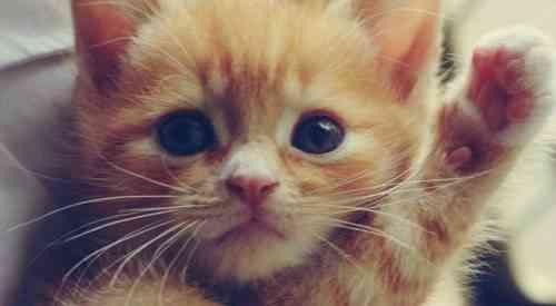 gato red social