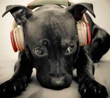 Perros con fobia al ruido